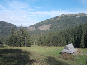 Paturage Tatras ferme